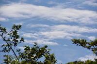 メジマグロ - 三宅島風景