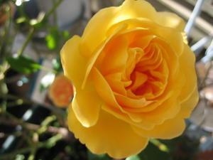 sola og planta ハーブとお花のお庭日記