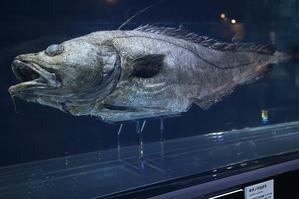 深海2017、最新研究でせまる生命と地球(国立科学博物館、上野) - 旅プラスの日記