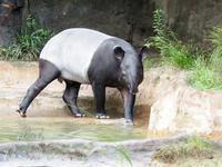 よこはま動物園ズーラシア 9月16日 - お散歩ふぉと