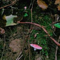 #瀬上の森 きのこコレクション - 千原櫻子日記2