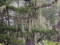 お化けみたいな知らない樹 - 鹿深の森