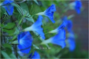 Heavenly blue*Ⅴ -