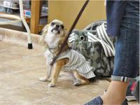 今週の 犬のしつけ方教室 - SUPER DOGS blog