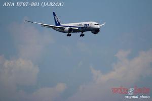 '17年 京浜島・つばさ公園レポート ・・・ANA/JA824A - winglets