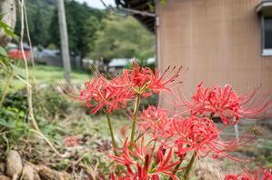 近所に咲く花々 -
