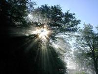 Morning light sparkle - デジタルで見ていた風景