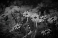 花を手に - フォトな日々
