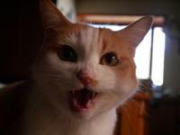 秋分の日、無為の力に任せる - ご機嫌元氣 猫の森公式ブログ