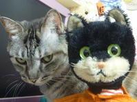 カメラ目線のシュコ―の猫君、魂入ってる~~~~~????? - ヴィンテージ・シュタイフと仲間たち
