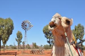 『Camel Farm』そして、ランチへ♪ - a&kashの時間。