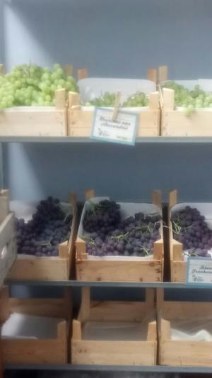 オーガニックの葡萄を求めて - Tree of Light オランダのオーガニックライフをお届けします。
