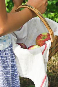 今年もリンゴ狩りへ行ってきました - NY/Brooklynの空の下