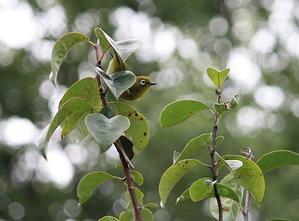 今日の鳥さん170921 -