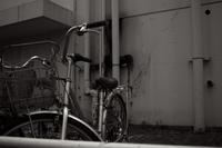 自転車 - S w a m p y D o g - my laidback life