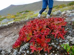 紅葉が始まった樽前山、2017.9.24 - デジカメ持って野に山に