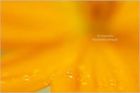 *Orange drops* - It's only photo
