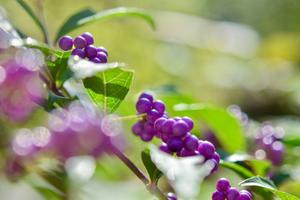 紫色は秋色。。。和室の前は紫づくし… - 元英国在住アート・セラピストが造る癒しの庭