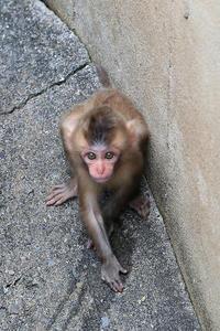 9月25日(月) 分割 - ほのぼの動物写真日記
