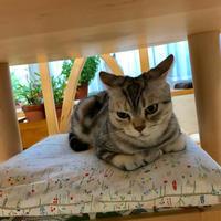 猫の缶詰 - 土筆の庭