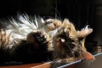 ぴーんと伸びる - 猫花雑記