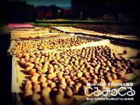 10月の出店予定 - くるみ農家がはじめた殻つきクルミと胡桃雑貨のネットショップくるみっくるのブログ「くるくるくるみ生活」