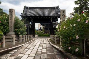 妙蓮寺 - 京都写真(Kyoto Photo)