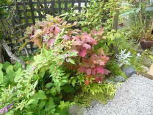 natural garden~       shueの庭いじりと日々の覚書き