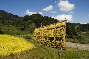 収穫の秋 - ヒデの気まぐれ撮影日記