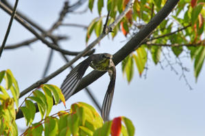 普正寺の森へ - 森の都愛鳥会