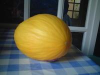 【フルーツ】黄色いメロン・・・ - フランス美食村