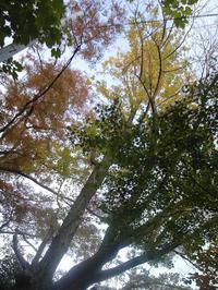 秋の風景 - 気ままにDIARY