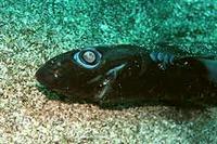 [Dive.81] ワキノハマでは一眼でサメの死体激写! - フラプッチ~のダイビング日記。