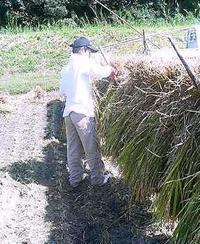 稲刈り - やさしい時間