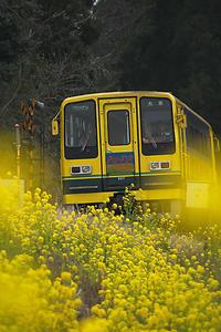 菜の花と電車(房総、夷隅鉄道) - デジカメ写真集