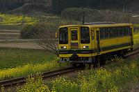 春の電車道 - デジカメ写真集
