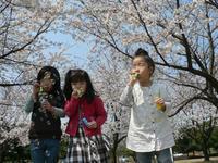 お花見~幼稚園部 - あるこう、あるこう