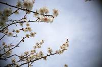 梅華 - 空ノ畑 a day in the life ...