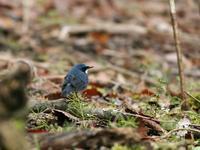 ゴールデンウィーク後半 - 写真で綴る野鳥ごよみ