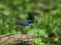 6月3日その2 - 写真で綴る野鳥ごよみ