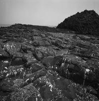 トド島(その3) -  アルビレオの 雑記帳