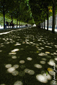 JARDIN DU PALAIS ROYAL 2 - いつものパリ