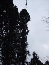 屋敷林の伐採・続き - スミヤキスト通信ブログ版