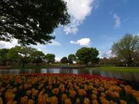 先週に引き続き、昭和記念公園まで - ichibey日々の記録