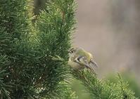 北の国にてー3 - 写真で綴る野鳥ごよみ