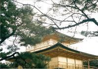 148枚目:松と金閣 - 明日への小ネタ