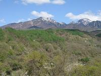 ■山の春 - 陶芸ブログ・さるのやきもの