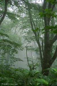 迷い込んだ森の中で・・・ - 空ノ畑 a day in the life ...
