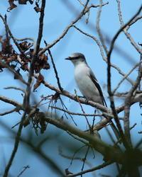 旅の途中で - 野鳥フレンド  撮り日記