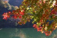 丹沢湖 - Tokyo days